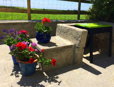 summer flowers on the patio