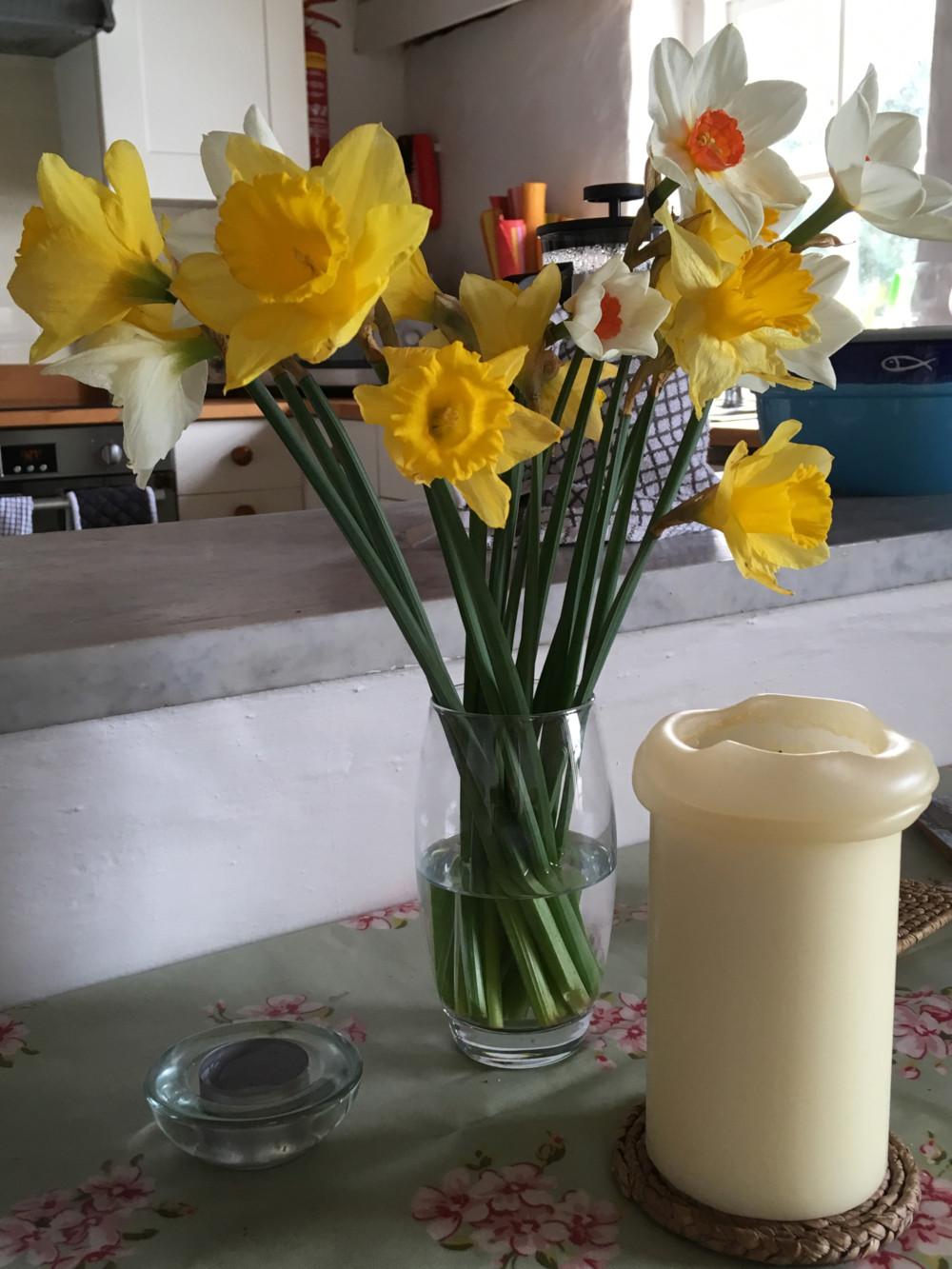 Cornish Daffodils at Molvenny