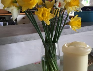 Cornish Daffodils at Molvenny